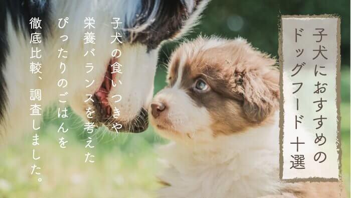 子犬用おすすめドッグフードランキング