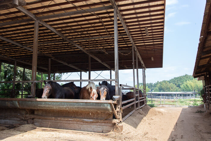 馬肉自然づくりドッグフードの肥育牧場3