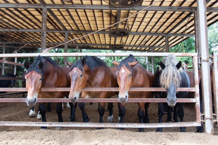 馬肉自然づくりドッグフードの肥育牧場4