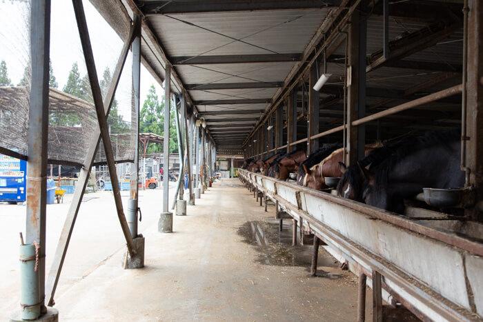 馬肉自然づくりドッグフードの肥育牧場5