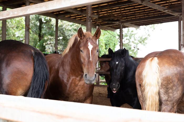 馬肉自然づくりドッグフードの肥育牧場6