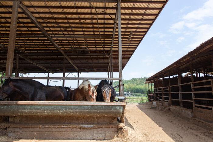 馬肉自然づくりドッグフードの馬の肥育牧場