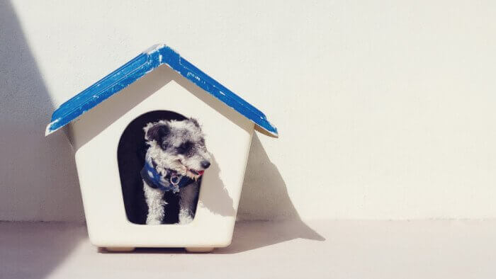 家から顔をだす犬