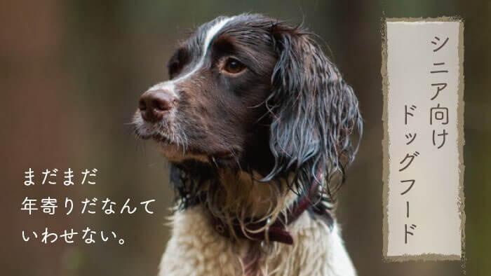 シニア犬・老犬向けドッグフードおすすめランキング