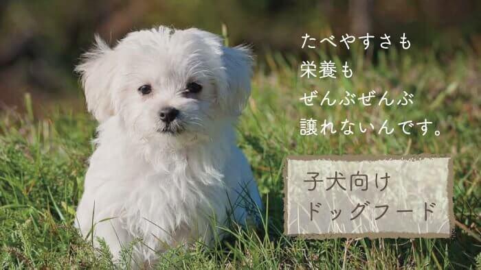子犬向けドッグフードおすすめランキング