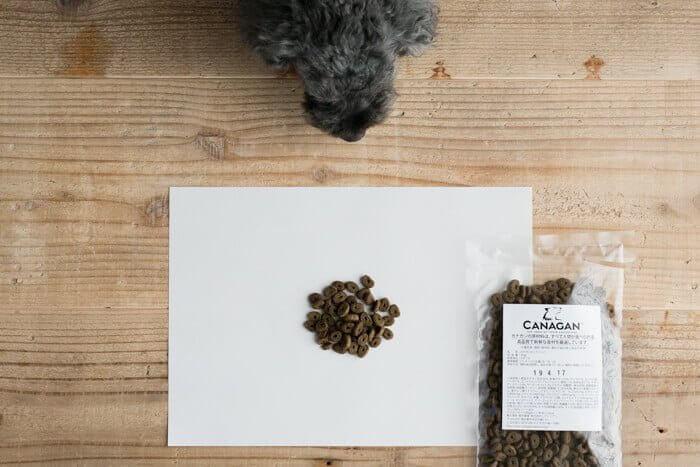 カナガンドッグフードの匂いを嗅ぐ犬