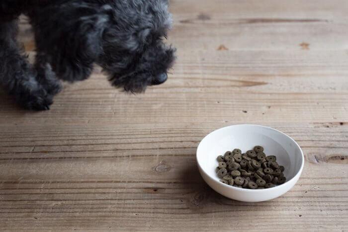 アランズナチュラルドッグフードラムの匂いを嗅ぐ犬