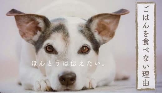 愛犬がご飯を食べない理由|原因と対策法は?病気とわがままの見分け方、ドッグフードなど餌を食べさせるコツ