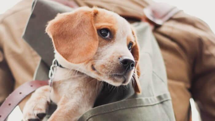 緊急事態で避難する犬