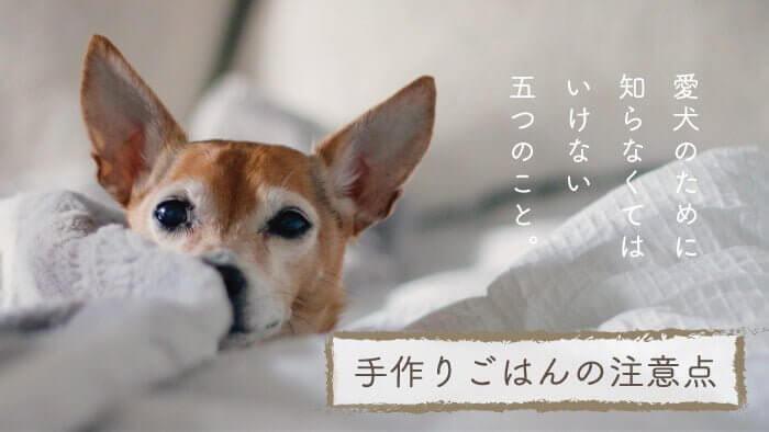 愛犬のための手作りご飯の注意点
