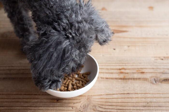 デイリースタイルドッグフードをお試しする愛犬3