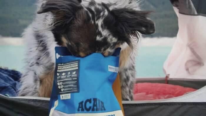 アカナドッグフードを食べた犬の口コミ評判評価