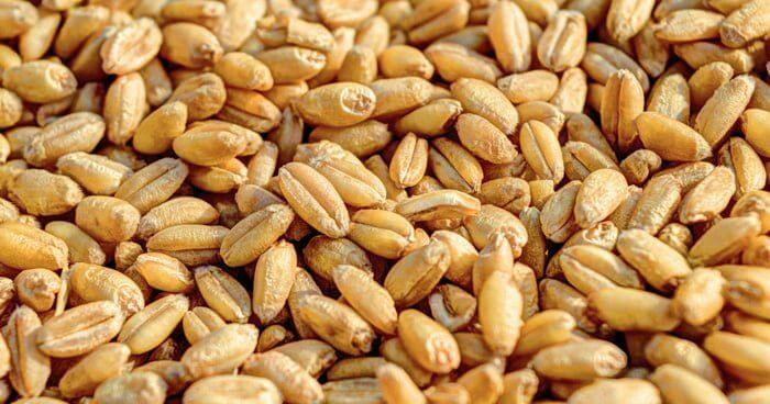 グレイン穀物類の麦