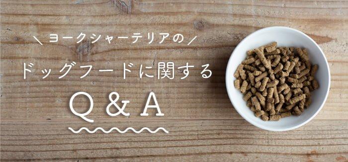 ヨークシャーテリアのドッグフードに関するQ&A